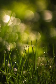 radivs:  'Grass, Water and Light' by Sorin Mutu