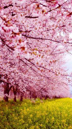 Wallpaper #nature#spring
