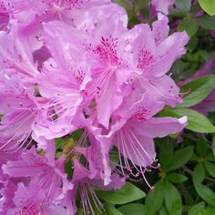 #nophotoshopneeded #남산 #남산타워 #한국 #구경 #여행 #관광 #이뻐 #예쁜 #꽃 #자연 #공원 #풍경 #신기 #특이 #nature #amazing #korea #flowers #tree #love #colorful #colors #namsan #namsantower #tourist #travel #travelgram by mila_marta Instagram Posts, Plants, Plant, Planets