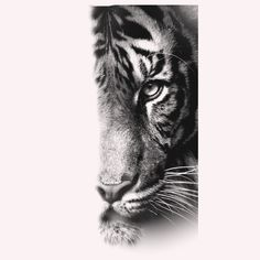 - You are in the right place about tattoo for women Here we offer you the most beautiful pictures ab - Leo Tattoos, Animal Tattoos, Body Art Tattoos, Small Tattoos, Tiger Tattoo Sleeve, Arm Sleeve Tattoos, Cat Tattoo, Tiger Tattoo Design, Tattoo Designs