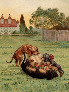 Dachshund Charming Dog Greetings Note Card Cute Dogs Play With Rugby Football