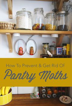 How To Prevent Get Rid Of Pantry Moths Pantry Moths Moth Pantry