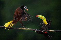 Kungfu birds....lol<3<3<3