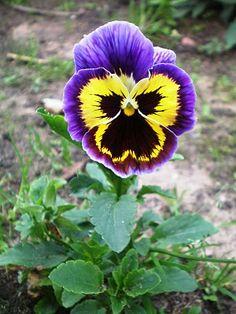Floricultura Multiflora Fernandopolis: Flores em Meu Jardim o Ano Todo