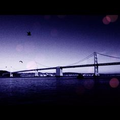 Birds #california #bridge #dashable #birds #water #ocean #photo #photography