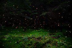 kateoplis:Ellie Davies, In Between the Trees