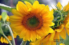 Июльское солнце, середина лета и летнее настроение спасает от депрессии в зимнюю стужу - Мое Настроение - социальная сеть для тех кому хорошо