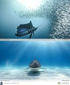 Underwater Sea Creatures | Ocean Floor