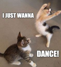 Tiffany hwang i just wanna dance funny cats funny animal memes cat memes Funny Animal Jokes, Funny Dog Memes, Cute Memes, Cute Funny Animals, Funny Cute, Memes Humor, Hilarious, Funniest Animals, Dog Humor