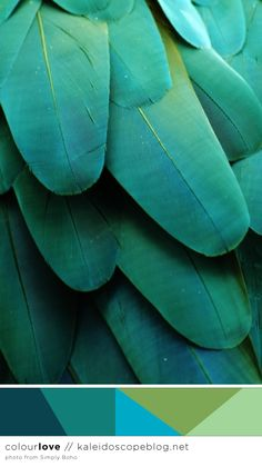 Colour Love // 74 - colour palette - color, green, turquoise, teal, aqua, lime, moss, bird, feathers