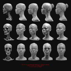 Anatomy references, C h a m a c h i n e Facial Anatomy, Skull Anatomy, Head Anatomy, Human Body Anatomy, Anatomy Poses, Anatomy Study, Anatomy Drawing, Anatomy Art, Anatomy Reference