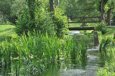 Conches-en-Ouche, petit pont de bois et plantes aquatiques dans la Vallée du Rouloir (Haute-Normandie, Eure 27)  #haute-normandie #Normandie #Conches-en-Ouche #Conches #Eure #Nature #Tourisme #Paris #Train #Arbres #Fleurs #Ruisseau #Rivière #Chaumière #Evreux #Breteuil #Forêt #Jardin #Garden #Trees #Patrimoine #Bio #Ecologie #Le-Neubourg #Rouen