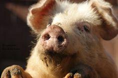 Farm Animals, Photography, Photograph, Fotografie, Photoshoot, Fotografia
