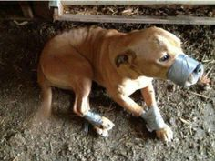 Petition | Prosecute Owner of Dog tied with Ductape