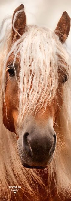 Look at that beauty! #horses