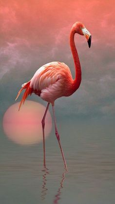 The thing is that, Flamingos are tropical wading birds that are pink in color, which makes them one of the most beautiful, and unique birds in the world. Flamingo Painting, Flamingo Art, Pink Flamingos, Flamingo Color, Painting Abstract, Pretty Birds, Beautiful Birds, Animals Beautiful, Flamingo Pictures