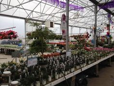 Proven Winners at Calloway's Nursery in North Plano Proven Winners, This Is Us, Nursery, Garden, Flowers, Plants, Garten, Baby Room, Lawn And Garden