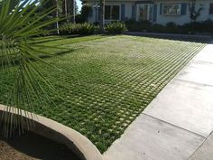 "This stuff is called ""Drivable Grass"". Would love to do this with moss as a patio."