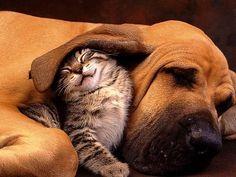 Snuggle buddies
