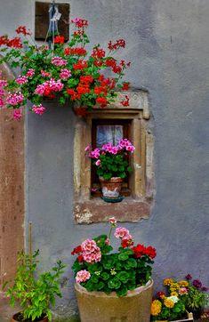 100 Window and Balcony Flower Box Ideas Diy Garden, Garden Art, Garden Design, Shade Garden, Balcony Flower Box, Flower Boxes, Beautiful Gardens, Beautiful Flowers, Garden Windows