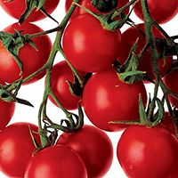 Grow your own tomatoes | BBC Good Food
