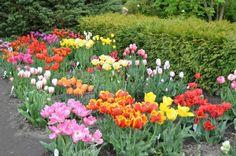 the-botanical-garden