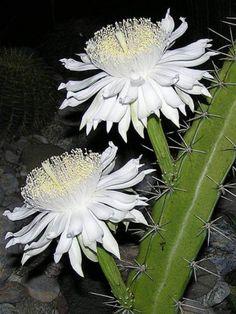 C&S (Cactus & Suculentas) - Community - Google+ Lyn A