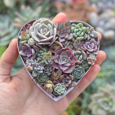 Little bits of baby succulent love 💕 Succulent Gardening, Planting Succulents, Gardening Tips, Planting Flowers, Succulent Plants, Baby Succulents, Bonsai, House Plants, Crafts For Kids