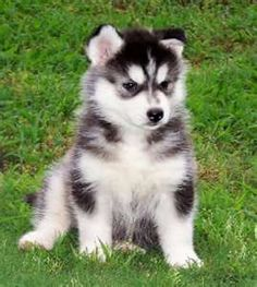 We were going to get a husky when we returned from travelling next year. he would have been named Atlas :-)