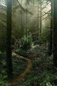 Misty forest in Silverton, Oregon