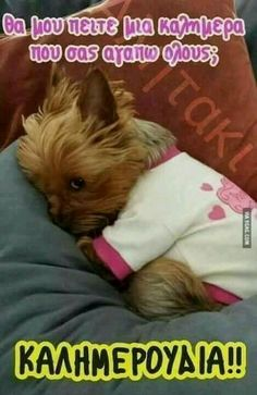 The Yorkie stink eye. My Yorkie used to give me this stink eye when he was in a bad mood Cute Puppies, Cute Dogs, Dogs And Puppies, Cute Babies, Poodle Puppies, Terrier Puppies, Bull Terriers, Baby Dogs, Cute Baby Animals