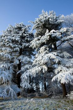 Winter Forest, Ashton Vale, Bristol, England