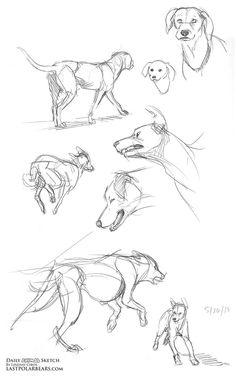 Image result for animal sketch art