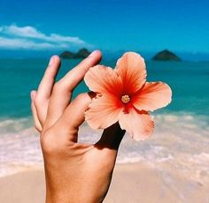 Next time I go to the beach, I'm finding a flower, and doing something like this.