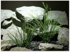 Plastic Aquarium Plants: Bead Grass #pap092