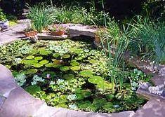 Making a Water Garden  http://www.garden.org/subchannels/health/crafts?q=show=1278