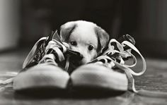 Dogs and shoes!