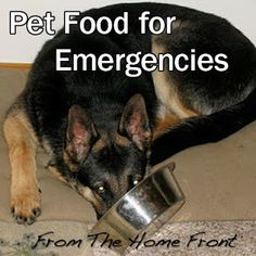 Pet Food for Emergency Preparedness – What to Store and How
