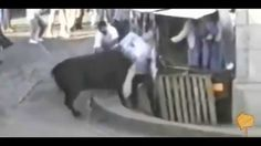 Funny bull videos People fail bull fighting Funny Animals videos Bull Fa...