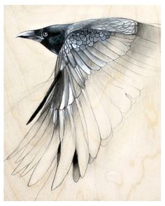 Raven Art Drawing Print Black and White by TheHauntedHollowTree