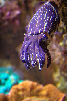 Cuttlefish - did not know they are purple.  I watched an hour long documentary on the cuttlefish on youtube and it was 100% entertaining i highly recommend it.