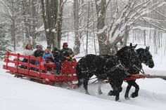 Black Horse Farm- Sleigh Ride