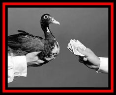 """""""Pagar el pato"""" y más expresiones con significados, ejemplos y expresiones sinónimas.  Frases y dichos."""