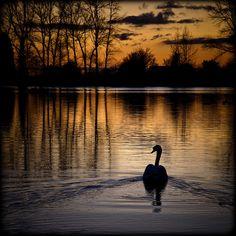 on golden pond #sunset