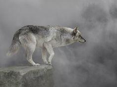 Wolf im Nebel