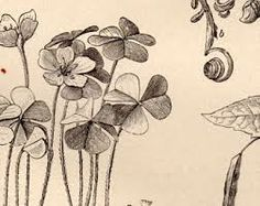 botanic image of flax