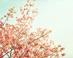 Spring Photography  peach mint green dogwood by CarolynCochrane, $30.00