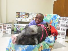 The Pig Who Tours the U.S. Reading to Children