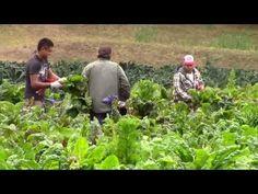 Vídeo: Agroecología, la agricultura del futuro. Miguel Altieri ecoagricultor.com