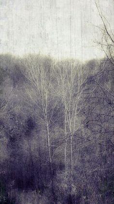 Trees by Lisa Garrison